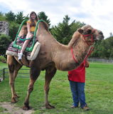 Camel ride Stock Images