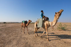 Camel rider. JAISALMER – DECEMBER 11: Rajasthani man riding a camel through Thar desert on December 11, 2010. About 40% of the total population of Rajasthan Stock Image