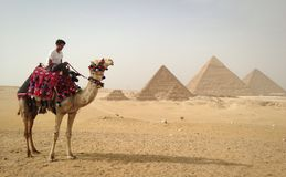 Camel rider. Egyptian young man riding a camel with the great pyramids of Giza on the background Stock Images