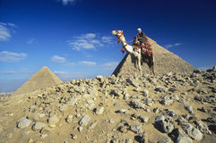 Camel Rider By Pyramids Of Giza. Low angle view of a camel rider by pyramids of Giza Stock Photo