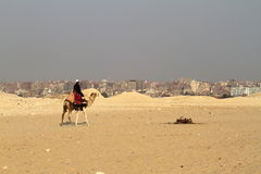 A Camel Rider in the Sahara Royalty Free Stock Image
