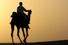Camel rider silhouette. Silhouette of a camel rider in the desert at sunset Stock Image
