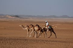 Camel Rider in Sudan. Camel rider in the Sudanese desert Stock Photo