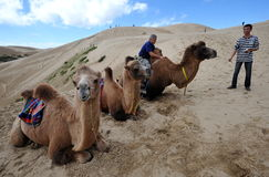 Camel riders. Tourists taking a camel ride in the desert in China, near Qinghai Hu in Qinghai province, western China, September 2009 Stock Photography