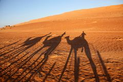 Shadows of camels on the red desert sands of Oman royalty free stock photography