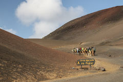 Camel riders in Timanfaya National Park, Lanzarote, Canary Island, Spain Stock Photo