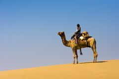Camel riding Royalty Free Stock Image