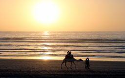 Camel riding on the beach Stock Images