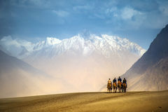 Camel riding at desert of Nubra Valley in Ladakh Stock Images