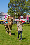 Camel riding at multicultural festival in Sydney Stock Photos