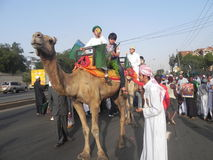 Camel riding in Nairobi Kenya. Muslims  mount  on camel   Nairobi Kenya during an Islamic festive  day Stock Images