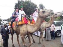 Camel riding in Nairobi Kenya. Muslims  mount  on camel   Nairobi Kenya during an Islamic festive  day Stock Photography