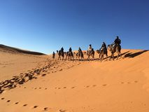 Camel caravan riding in the Sahara Desert, Fez to Marrakech Desert Tour royalty free stock image