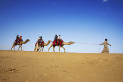 Camel riding, Thar Desert, India. JAISALMER, INDIA - FEB 25: Cameleer and customers at the Sam Sand Dune on Feb 25, 2013 in Jaisalmer, India. Camel riding royalty free stock photo