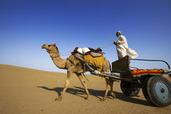 Camel riding, Thar Desert Stock Photography