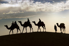Camel riding in Thar Desert Royalty Free Stock Image