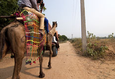 Camel riding. Tourists riding on camel back at Rajasthan, India Stock Photography