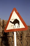 Camel road sign. Indicating possibility of camels crossing the road. Southern Qatar Stock Image