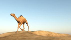 Camel running - 3D render Stock Photography
