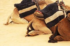 Camel`s backs in the Sahara, Tunisia. Northern Africa Stock Photography