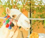 Camel's Head Stock Image