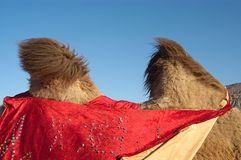 Free Camel S Humps Royalty Free Stock Images - 5736109