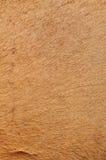 Camel's skin Stock Image