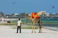 Camel with saddle on beach Stock Image