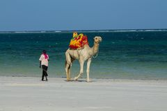 Camel with saddle and black man on the beach Stock Photos