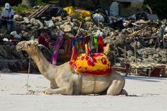 Camel with saddle and black man on the beach. Camel with red saddle on the ocean beach, Indian ocean entertainment in Africa Stock Images