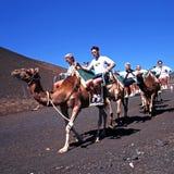 Camel Safari, Lanzarote. Royalty Free Stock Photo