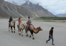 Camel safari in Nubra Valley, Ladakh Royalty Free Stock Photo