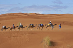 Camel Safari in the Sahara Stock Photography