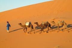 Camel safari in Sahara. People riding camels in the sand desert dunes of Sahara. Safari on camels back stock image