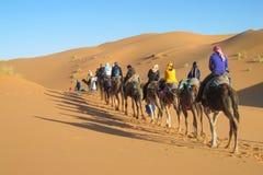 Camel safari in the sand desert royalty free stock photos