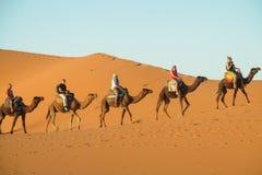 Camel safari in the sand desert stock images