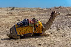 Camel Safari in Thar Desert, Jaisalmer, India. Camel Safari in Thar Desert, India Summer stock photography