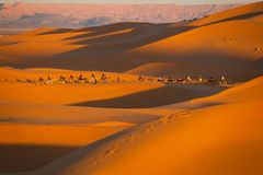 Camel safari on west sahara desert Stock Image