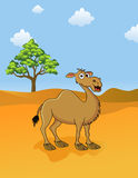 Camel in the savanna Stock Photo
