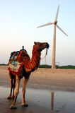 Camel on a seashore,backgroun windmill. Stock Images