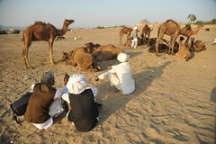 Camel sellers Royalty Free Stock Photos