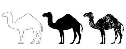 Camel set black white grunge Stock Photography