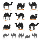 Camel set. Vector Royalty Free Stock Photos