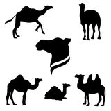 Camel set vector. Camel set of black silhouettes. Icons and illustrations of animals. Wild animals pattern vector illustration