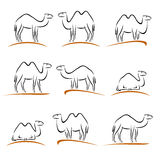 Camel set. Vector Royalty Free Stock Images