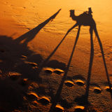 Camel shadow. Camel caravan shadows in Sahara desert Royalty Free Stock Photography