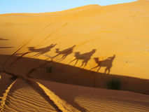 Camel shadow in desert Royalty Free Stock Photo