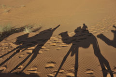 Camel shadows Stock Image