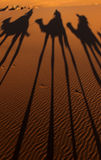 Camel Shadows. Camel trek in Sahara Desert sand dunes, Morocco Stock Image