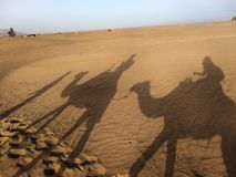 Camel shadows Royalty Free Stock Photography